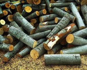 Преимущества и недостатки дров из осины, ольхи, липы, ивы и плодовых деревьев